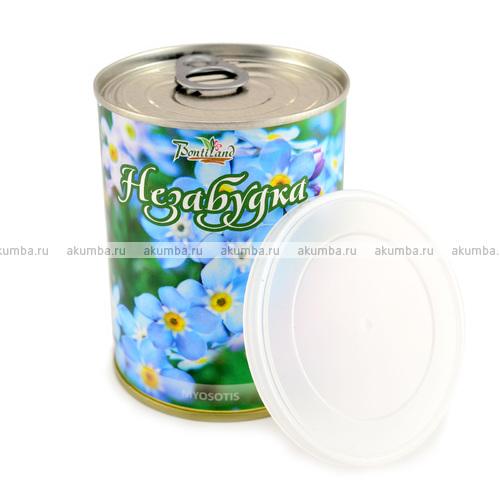 """Цветок в банке """"Незабудка"""" (Myosotis)"""